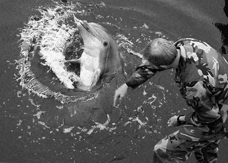Обучение боевых дельфинов.