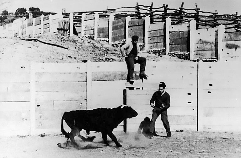 Хосе Дельгадо управляет быком.