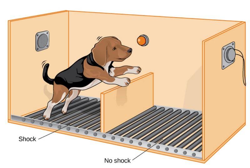 В 1964 году Мартин Селигман провёл серию экспериментов над собаками в психологической лаборатории Пенсильванского университета.