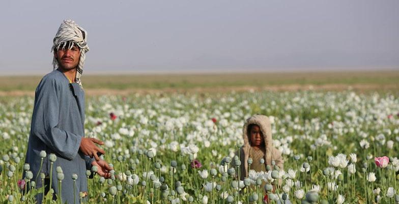 Пакистан является крупнейшим экспортёром каннабиса, героина и опиатов.