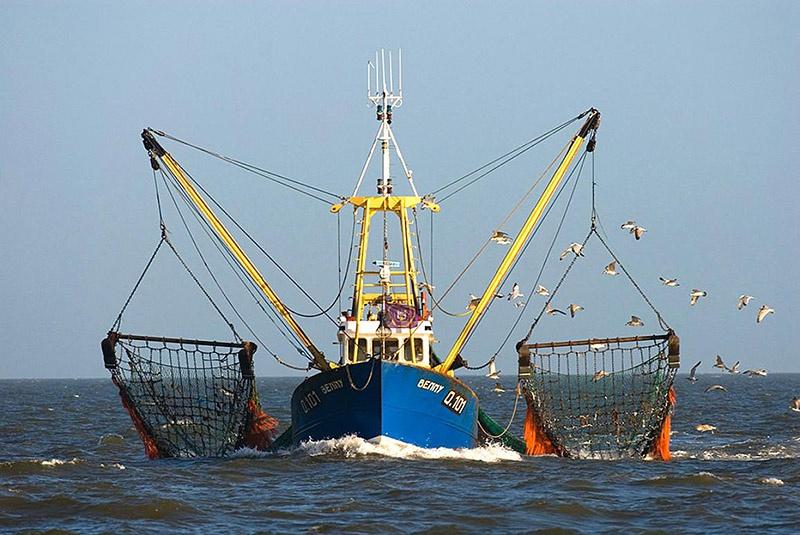 Большинство европейских рыбных компаний ведут свой промысел в британских территориальных водах.