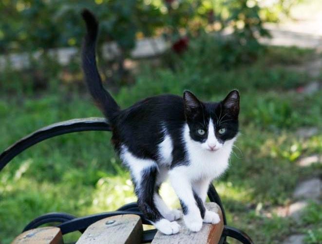 Кошки оказались восприимчивы к вирусу COVID-19.