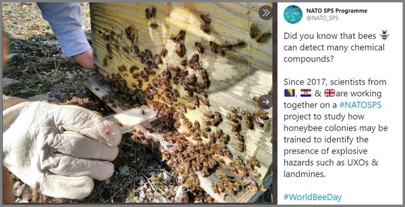 На вооружении натовских сапёрных подразделений в скором будущем появятся пчелиные ульи.