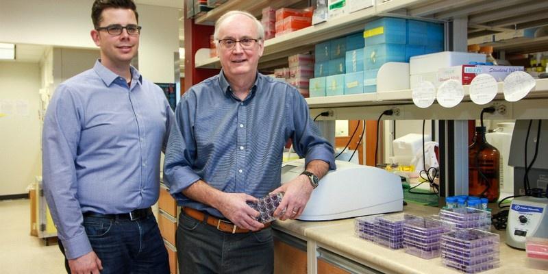 Вирусологи Дэвид Х. Эванс и Райан С. Нойс синтезировали живой вирус лошадиной оспы.