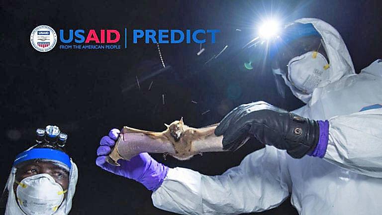 Программа Predict (USAID) собирала базу зоонозных вирусов и создавала методом генной инженерии из них опасные для человека патогенные микроорганизмы.