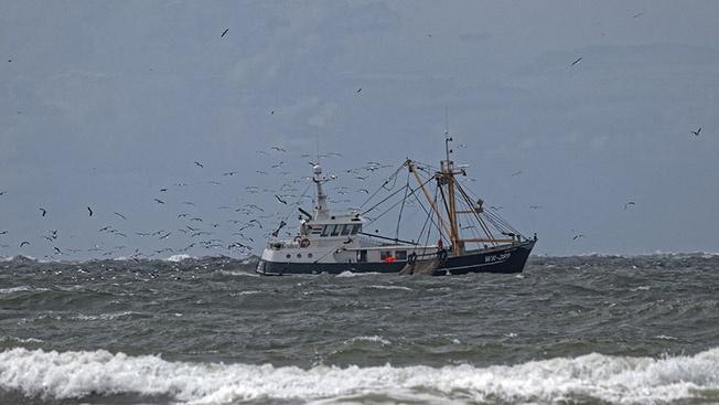 Не только рыбный вопрос испортил европейский союз