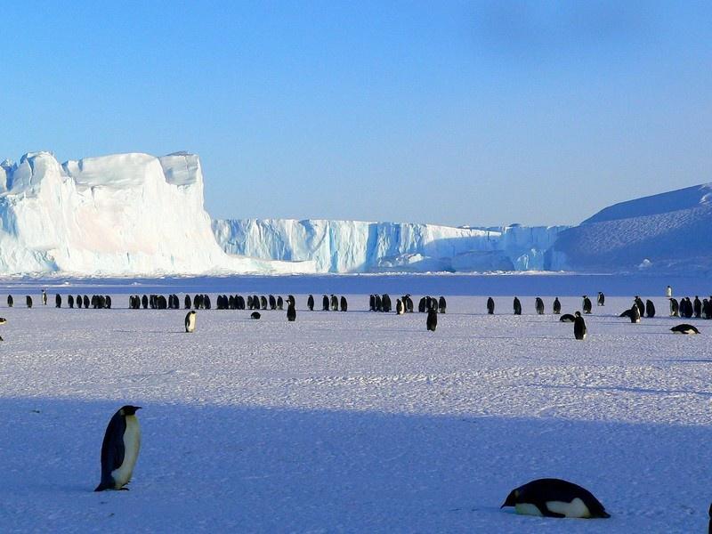 Антарктида - это 80 % мировых запасовпресной питьевой воды.