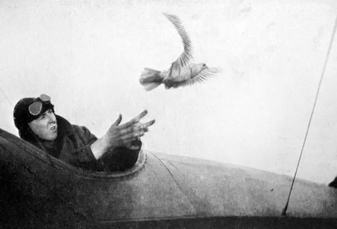 За годы войны почтовыми голубями ВГС РККА было доставлено 150.000 голубеграмм.