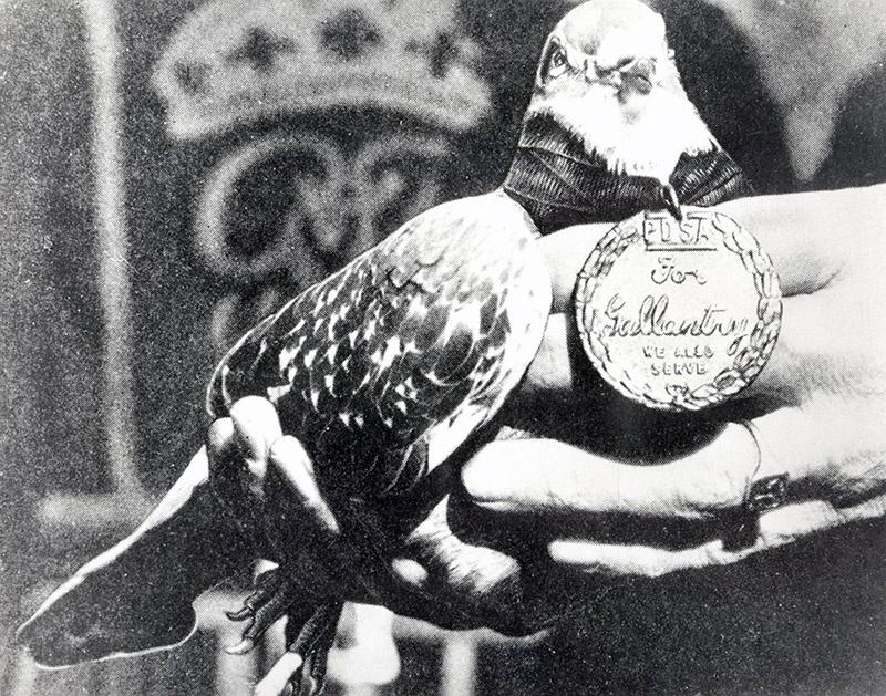 За заслуги в ходе Второй мировой войны медаль была вручена 32 голубям.
