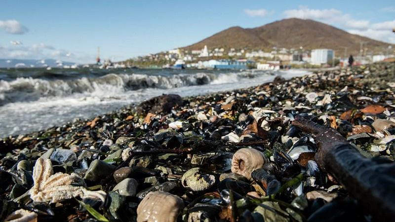 Массовую гибель донных организмов обнаружили на юге Камчатки.
