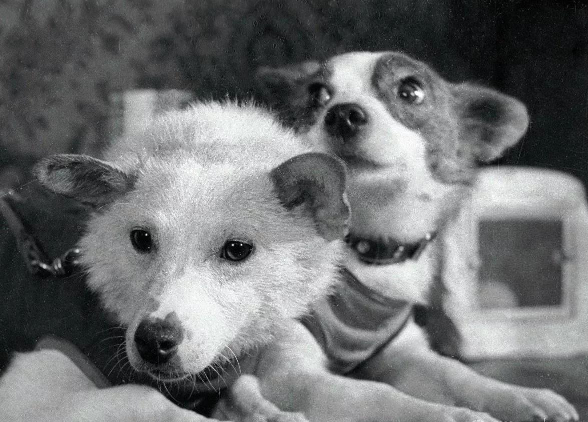 Белка и Стрелка - собаки, совершившие космический полёт.