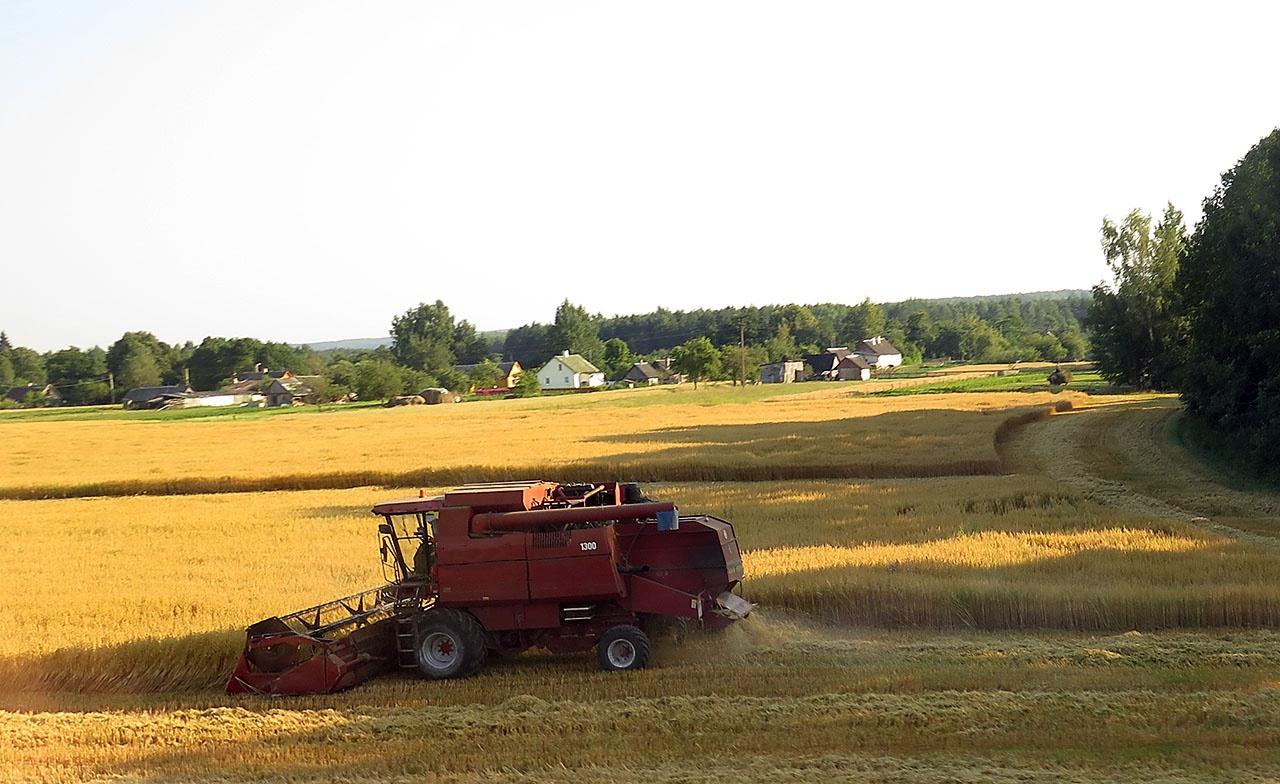 В последние годы в стране рекордные урожаи зерна как ни странно вызвали резкий рост цен на внутреннем рынке. Кому это выгодно?