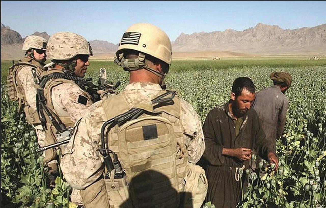 Вооружённые до зубов и откормленные церберы «империи добра» праздно и самодовольно наблюдают за тем, как местные рабы в каком-нибудь очередном Афганистане «делают им красиво», собирая урожай наркотического сырья.