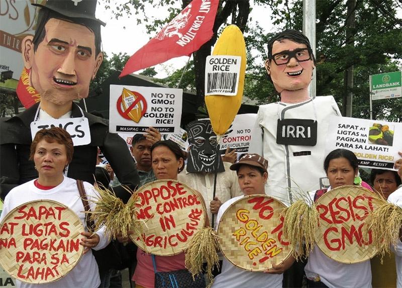 Протестующие против «золотого риса» фермеры.