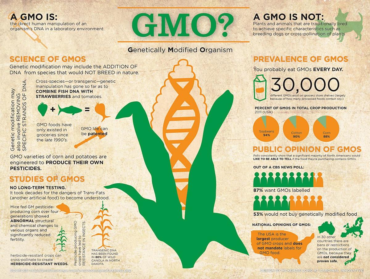 Вред генно-модифицированной-продукции доказан во многих странах, в том числе и в России.