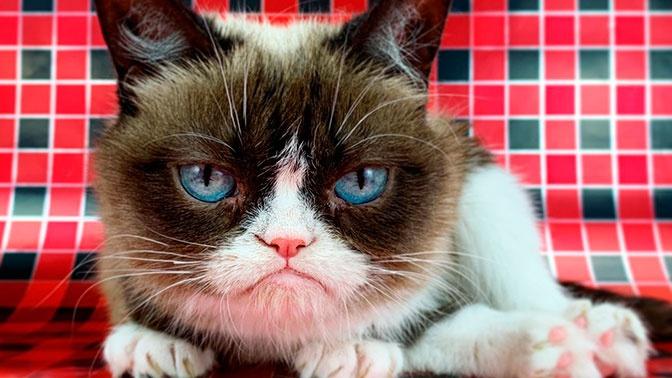 Сердитая кошка, заставляющая улыбаться: скончалась звезда мемов Grumpy Cat