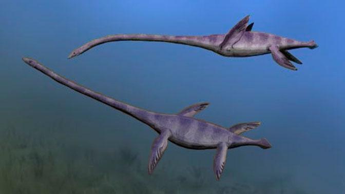 Останки крупнейшего морского монстра на Земле найдены в Антарктиде