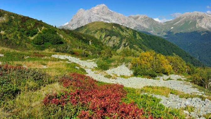Опасное путешествие: ученые предупредили о растениях-убийцах в горах
