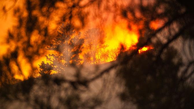 Как в Швеции: алтайский депутат предложила тушить пожары в Сибири бомбами