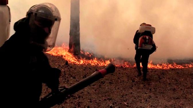 Американского лесного пожарного депортируют из Читы