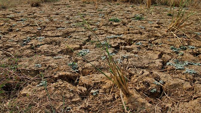 В Забайкалье введен режим ЧС из-за засухи