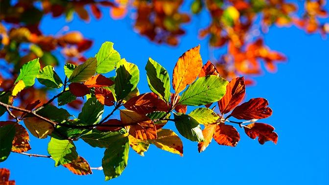 Летняя осень: синоптики объяснили, почему так рано пожелтели листья