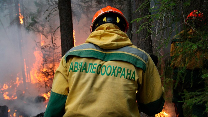 Площадь лесных пожаров в Сибири вновь увеличилась