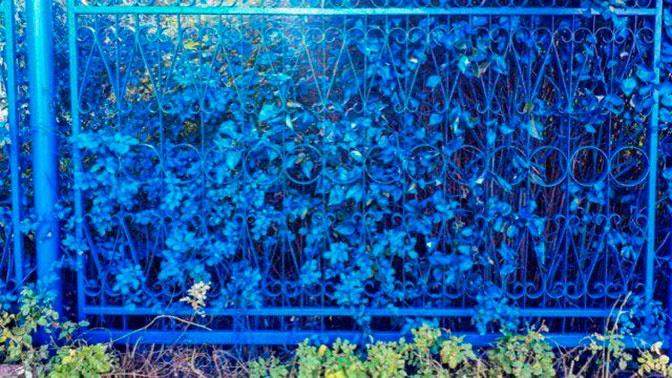 Цвет настроения синий: под Нижним Новгородом забор покрасили вместе с кустами