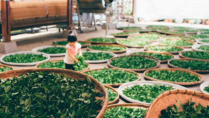 Ученые обнаружили неожиданный новый эффект зеленого чая