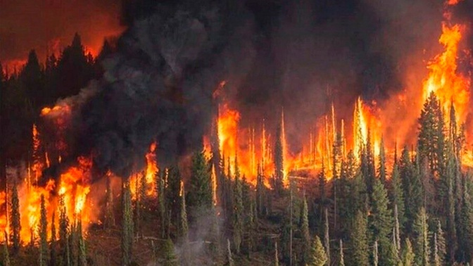 Лесную отрасль ждут масштабные прокурорские проверки