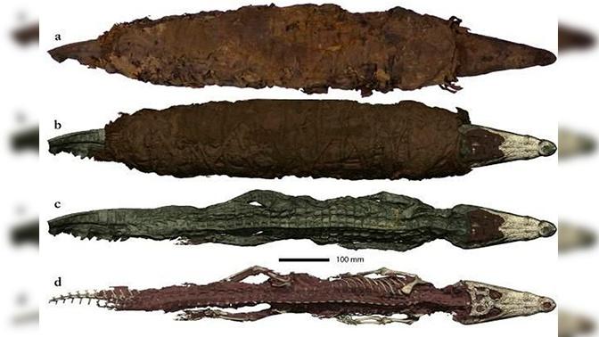 Зубастые и опасные: обнаружены останки главного врага динозавров