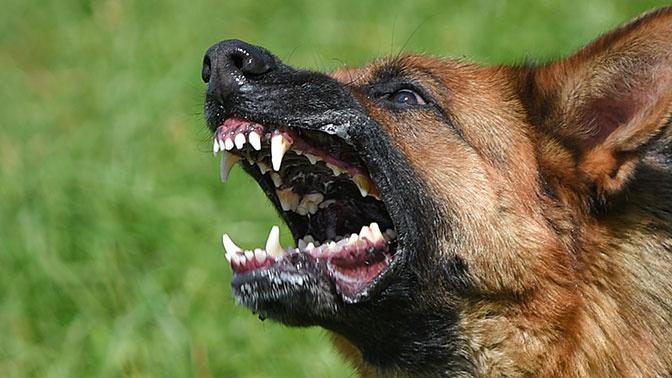 Кинологи оценили рекомендации МЧС о поведении при нападении собаки