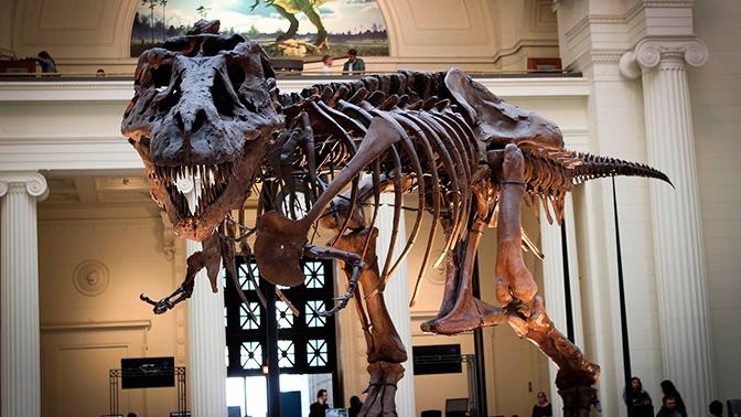 Ученые восстановили последний день жизни динозавров