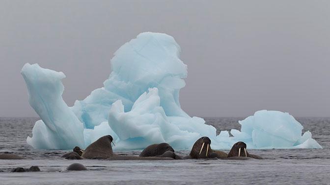 «Тепловая аномалия»: температурные рекорды зафиксированы в России