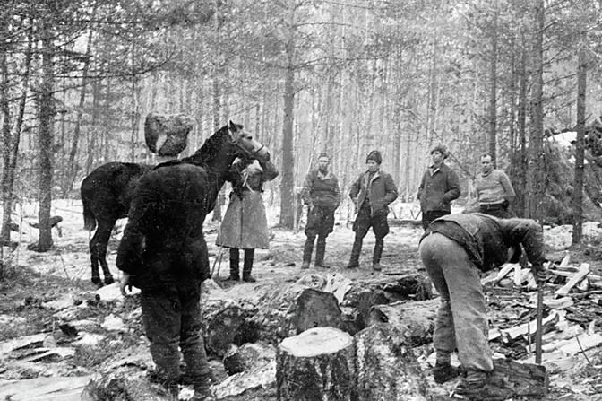 Ветеринарный врач осматривает верховую лошадь командира партизанского отряда Дмитрия Медведева в лесу под Ровно<figcaption class=