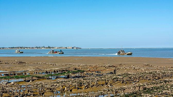 «Дары» моря: на побережье Франции выбросило 150 килограммов кокаина