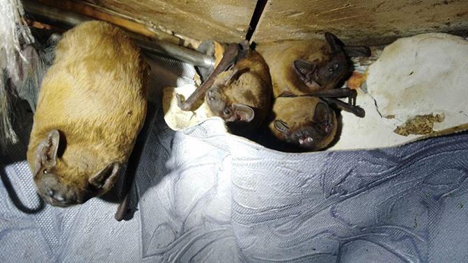 Более сотни летучих мышей «оккупировали» квартиру в многоэтажке: кадры с места