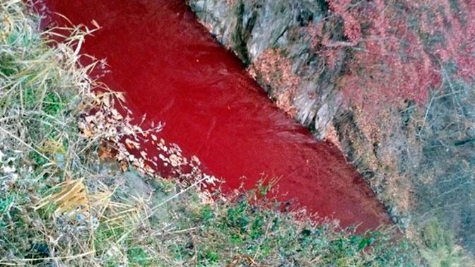 Кровавая река: страшные последствия истребления свиней в Южной Корее