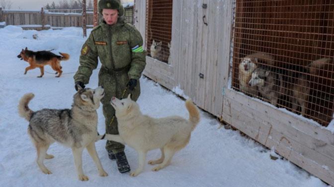 Питомник ездовых собак создали для военных в Арктике