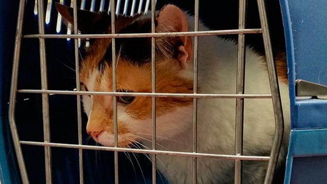 Авиакомпаниям предложили ввести единые нормы провоза животных