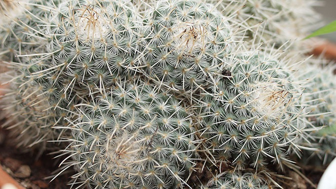 Названы полезные и опасные растения для дома