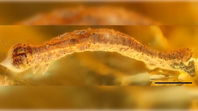 Янтарная комната: в окаменевшей смоле нашли животное возрастом 44 миллиона лет