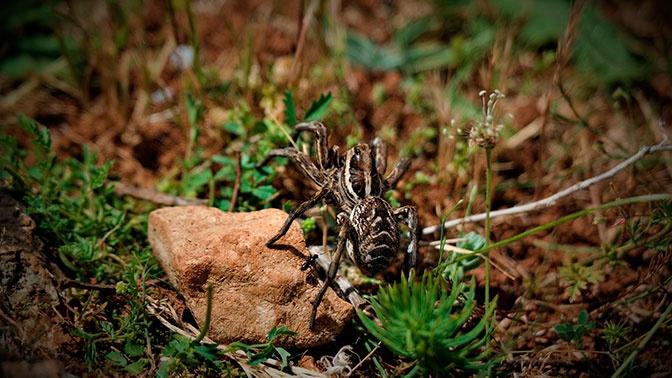 Ученые нашли новые для России пять видов пауков
