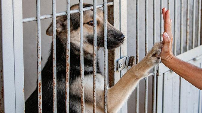 Правительство утвердило правила по содержанию животных в приютах