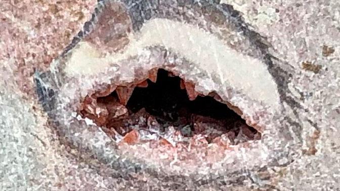 В петербургском метро нашли окаменелости возрастом 485 млн лет