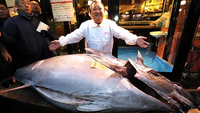 На рыбном аукционе в Токио продали тунца размером с человека