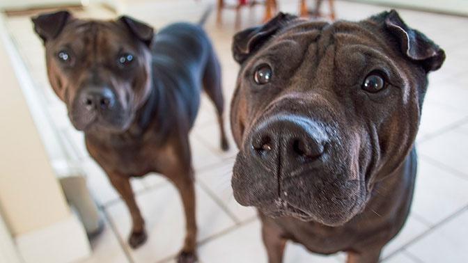 Ученые выяснили, что наличие собаки в доме спасает от шизофрении