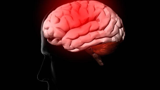 Эволюция вспять: почему человеческий мозг глупеет