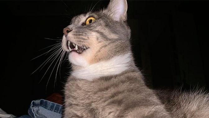 Кота-оберега от COVID-19 за 6 млн рублей продают в Хабаровске