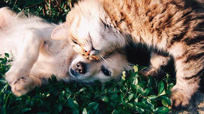 Берегите пушистых: названо самое уязвимое для коронавируса домашнее животное